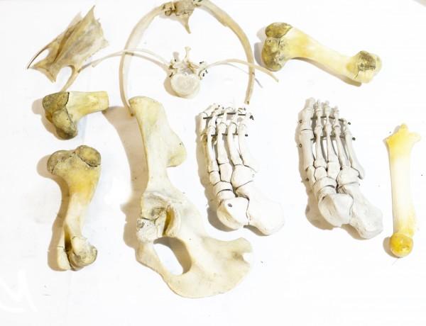 Konvolut Lehrmittel Knochen
